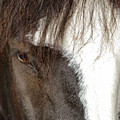 Thoroughbred Portrait One by Bob Phillips