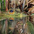 Those Eyes Frog Eyes by Asbed Iskedjian