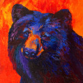 Thoughtful - Black Bear by Marion Rose