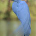 Thoughtful Heron by Kim Henderson