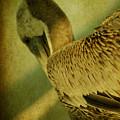 Thoughtful Pelican by Susanne Van Hulst