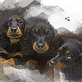 Three Adorable Black And Tan Dachshund Puppies by Maria Astedt