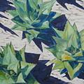 Three Aloe by Karen Doyle