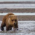 Three Bears by Kathy Whitehurst