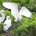 Three Birds Of A Feather Flock Together by Patricia Twardzik