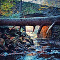 Three Bridges  by Shelley Smith