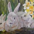 The B. Rabbit Family by Cheryl Damschen