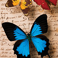 Three Butterflies by Garry Gay