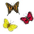 Three Butterflies by Michael Vigliotti
