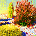 Three Cacti by Amy Vangsgard