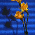 Three Cheers - Yellow Daffodils In A Red Bowl by Mitch Spence