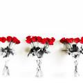 Three Dozen Roses by Scott Pellegrin