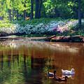 Three Ducks At The Azalea Pond by Tamyra Ayles