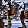 Three Ducks  by Blake Richards