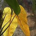 Three Exotic Leaves by Viktor Savchenko
