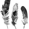 Three Feathers Silhouette by Joanna Szmerdt