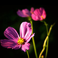 Three Flowers by Karen Scovill