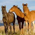 Three Foals by Kent Keller