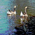 Three Geese Swimming by Diann Baggett