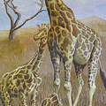 Three Giraffes by Dominic White