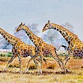 Three Giraffes by Joseph Thiongo
