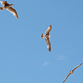 Three Gulls by Jay Billings