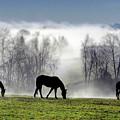 Three Horse Morning by Sam Davis Johnson