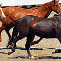 Three Horses Galloping by Clarence Alford