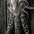 Three Indian Corn In Black And White by Garry Gay