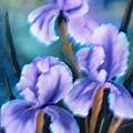 Three Iris by Felix Turner