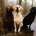 Three Labs by Robert Smith