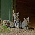 Three Musketeers  by Susan Ballard