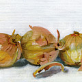Three Onions by Sarah Lynch