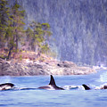 Three Orca Whales by Jeanette Mahoney