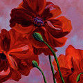 Three Oriental Poppies by Donna Drake