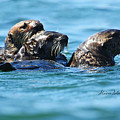 Three Otters by Alison Salome