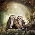 Three Owl Moon by Carol Cavalaris