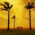 Three Palm Trees And A Bench by Osvaldo Hamer