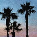 Three Palms by Paul Wilford