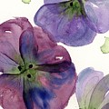 Three Pansies by Dawn Derman