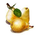 Three Pears by Irina Sztukowski