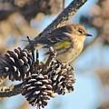 Three Pine Cones And A Little Bird by Karen Silvestri