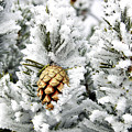 Three Pinecones by Marilyn Hunt