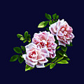 Three Pink Roses With Leaves by Susan Savad