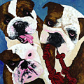 Three Playful Bullies by Megan Morris Collection