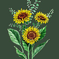 Three Playful Sunflowers by Irina Sztukowski