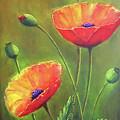 Three Poppies by Silvia Philippsohn