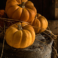 Three Pumpkins On A Bucket by Ann Garrett