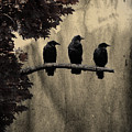 Three Ravens Branch Out by Gothicrow Images