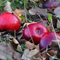 Three Red Apples by Damijana Cermelj